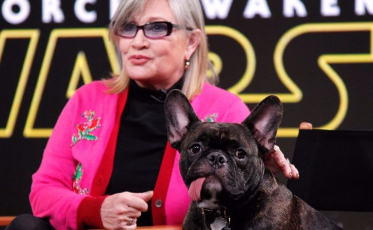 Así ve el perrito de Carrie Fisher a su ama en el trailer de 'The Last Jedi'
