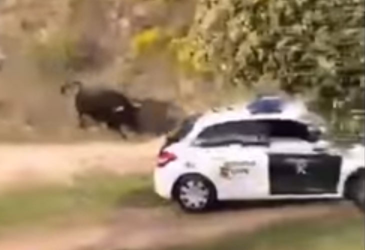 Un toro bravo suelto por Madrid pone en aprietos a la Guardia Civil